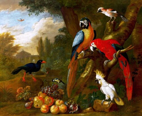 Classical oil painting macaw and bird Giclee Art Printed on canvas L2062