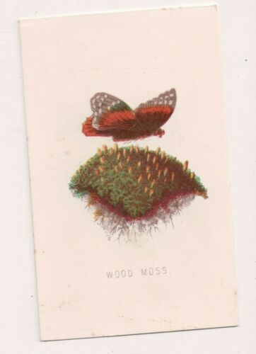 Vintage CDV  Hand tinted Color Wood Moss w Butterflies