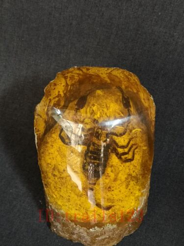 Collection China Synthetic Amber Scorpion Specimen art Unique Old Decoration