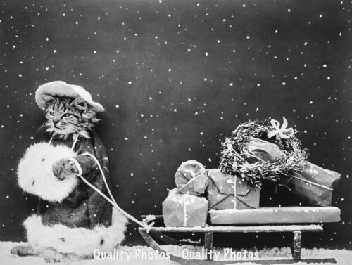 """Christmas Cat Pulls Sled with Packages 8.5x11"""" Photo Print Funny Animal Xmas USA"""