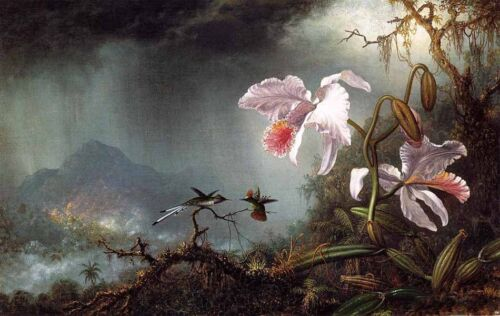 Oil painting Martin Johnson Heade - Two Fighting Hummingbirds with Two Orchids