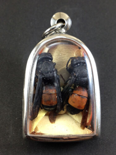 Rare Unusual Amulet Buddha Thailand Real SACRED WASP With Sacred wood LP Jued