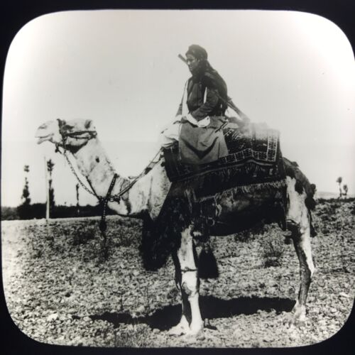 Antique Magic Lantern Glass Photo Slide Camel And Rider Egypt