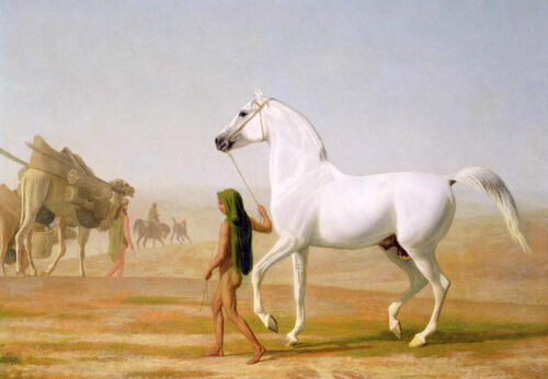 """Exquisite Oil painting naked Arab man with white horse in desert with camels 36"""""""