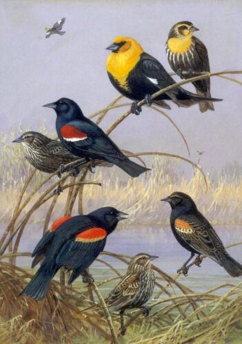 Beautiful Oil painting eight birds by the river in autumn landscape Hand painted