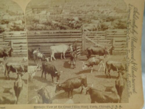 Antique 1893 or 1883 Stereoview Card of Cattle in the Chicago Stockyards