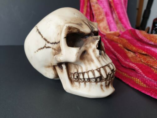 Old Cast Skull …beautiful collection & display item