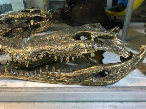 50cm Crocodile skull solid brass large heavy decoration hand made large amazingB