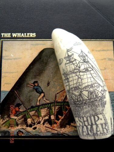 """Scrimshaw Sperm whale tooth resin REPRODUCTION ship  """"TAMAR"""" 6&1/2 INCHES LONG"""