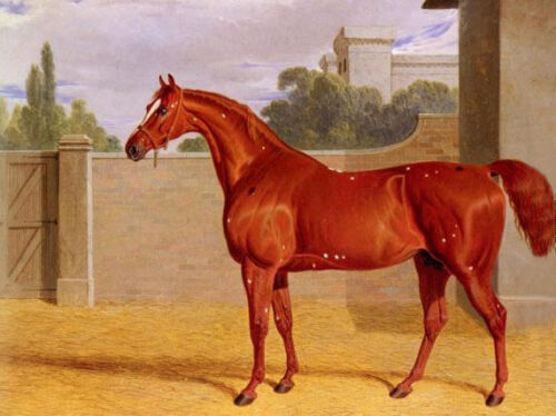 Oil Herring, John Frederick Jr - Comus, A Chestnut Racehorse in a Stable Yard