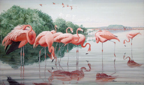 American Flamingos  by Louis Agassiz Fuertes Giclee Canvas Print Repro