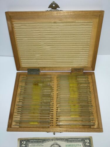 Vintage wooden case with more than 45 prepared slides of organisms microscope