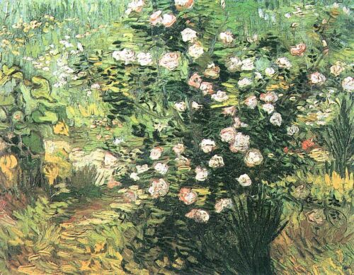 Flowering rosebush by Vincent Van Gogh Giclee Fine Art Print Repro on Canvas