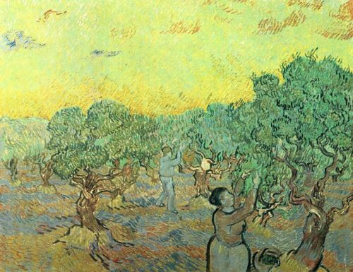 Olive pickers in a grove by Vincent Van Gogh Giclee Print Repro on Canvas