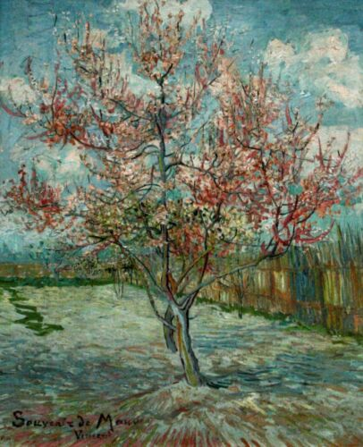 Pink Peach Trees Souvenir de Mauve by Vincent Van Gogh Giclee Repro on Canvas