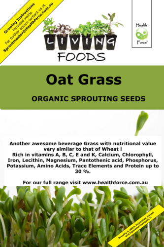 Oat Grain Organic Sprouting Seeds