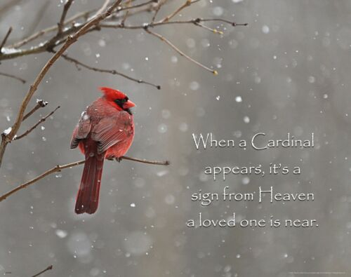 Bird Watching Club Art Print Remembrance Family Gift Cardinal Sign From Heaven