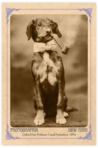 Victorian Oxford Don Dog With Pipe Vintage Photograph Reprint Cabinet Card CDV