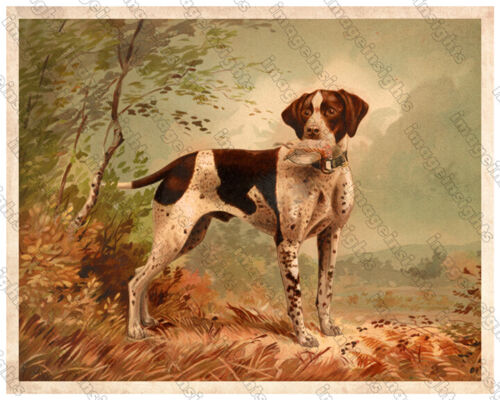 HUNTING DOG Quality Restored Photoprint from 1879 Vintage Lithograph 3 Sizes