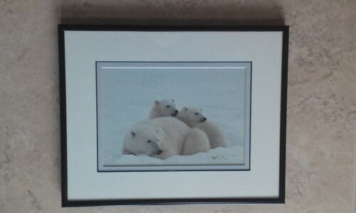 Polar Bear with Cubs Marine Mammals Picture By Mark Thomas Signed Matted Framed