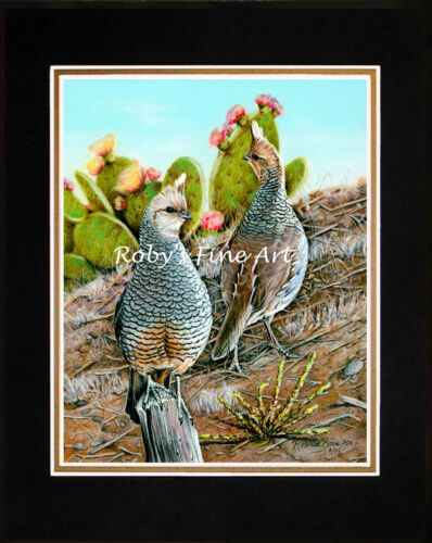 """Matted Scaled Quail Art Print """"Cottontops"""" 8x10 Mat by Realism Artist Roby Baer"""