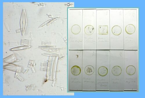 12 Antique Microscope Slides Diatoms from Different UK Victorian era locations