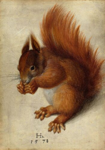 Hans Hoffmann after Albrecht Durer Red Squirrel Fine Art Real Canvas Print New