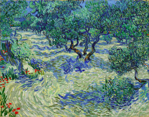 "Vincent Van Gogh Olive Orchard Painting 12.5"" x 15.8"" Real Canvas Art Print"
