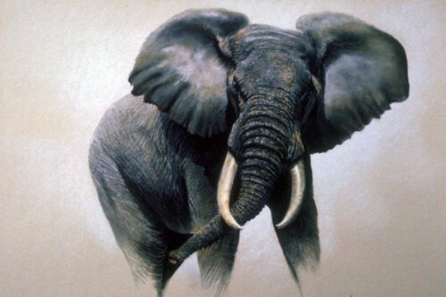 Large 12x18  African Elephant Africa Painting Real Canvas Giclee Art Print New