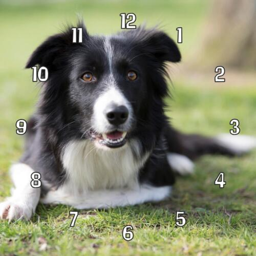 """Personalise your own. Collie dog image/picture Handmade Wall Clock 19.6cm 8"""""""