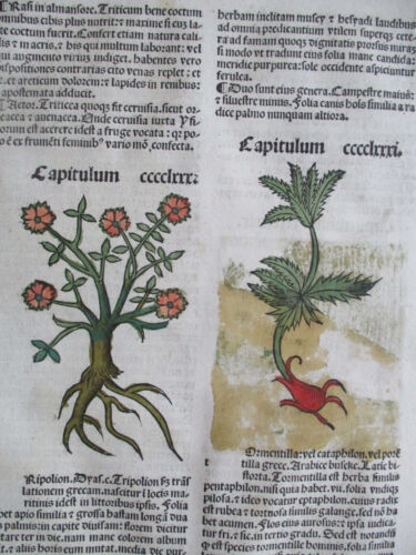 Incunable Leaf Hortus Sanitatis Wheat etc. Colored Woodcut Venice - 1500