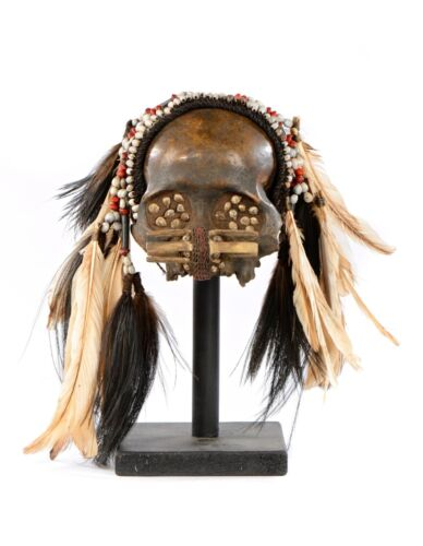 Tribal Asmat Skull Headdress With White Feather Beads Adornment Papua Ritual Art