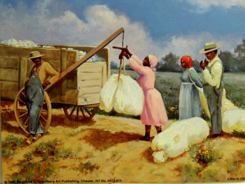 ETHNIC COTTON FIELDS PICTURE PICKING COTTON TWO PRINTS 8X10