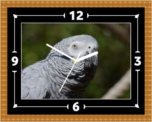 African Grey Parrot Clock Gift Present Christmas Birthday (Can Be Personalised)