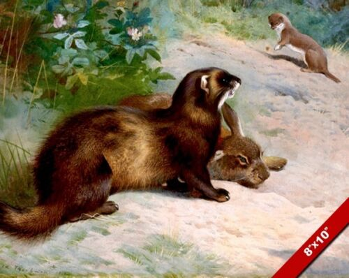 WEASEL POLECAT & RABBIT ANIMALS IN WILDERNESS PAINTING ART REAL CANVAS PRINT
