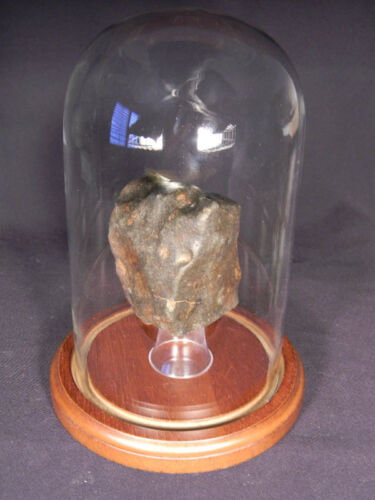 Top Quality GLASS DOME with WOOD BASE Display LARGE 310