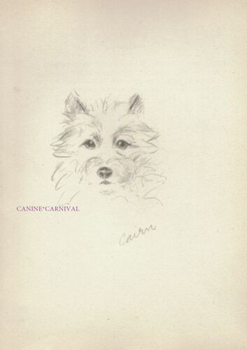 SERIOUS VINTAGE CAIRN TERRIER FACE Art Print  1946 by Lucy Dawson