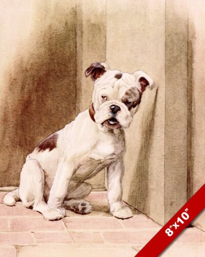 CUTE BULLDOG PET PUPPY DOG ANIMAL ART CECIL ALDIN PAINTING PRINT ON REAL CANVAS