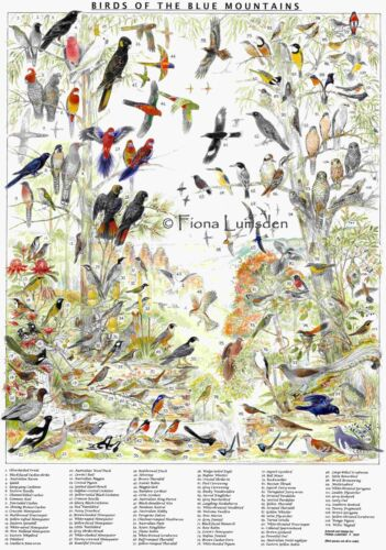 Blue Mountains Bird Poster ... Un-Laminated (best for self-framing)