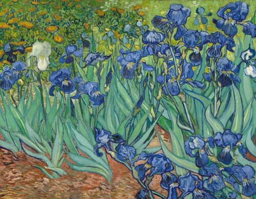 Vincent van Gogh Irises CANVAS ART PRINT Floral Wall Decoration Poster SM 8x10