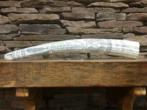 "HISTORIC Scrimshaw Walrus Tusk ""CHARLES W MORGAN"" RESIN  REPLICA"
