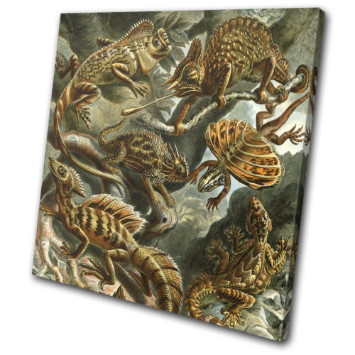 Floral Lizard Reptile Vintage Animals SINGLE CANVAS WALL ART Picture Print
