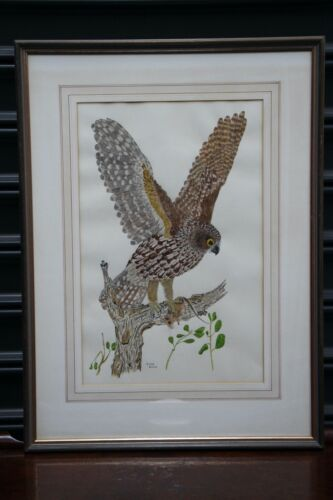 Original painting Boobook Owl watercolour signed by Melbourne artist Tony Dunk