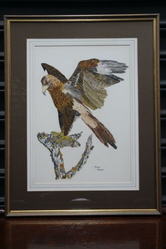 Original painting eagle watercolour signed by Melbourne artist Tony Dunk 70's