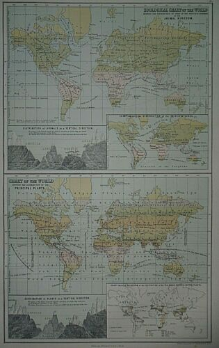 Rare Vintage 1884 Statistical World Map ~ ANIMALS - PLANTS - ZOOLOGICAL CHART