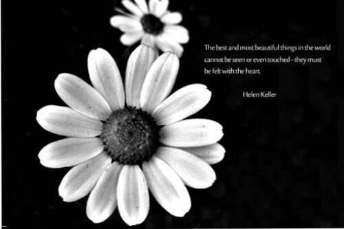 daisy coming at you HELEN KELLER quote INSPIRATIONAL poster 24X36 BEAUTY