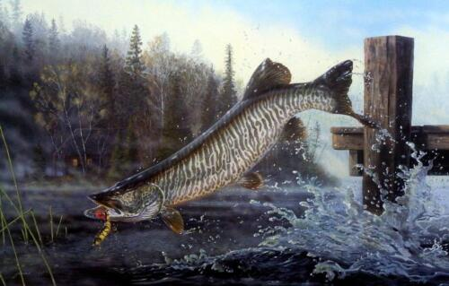 "Terry Doughty "" Tiger in the mist"" Musky Fishing Art Print 25"" x 16"""