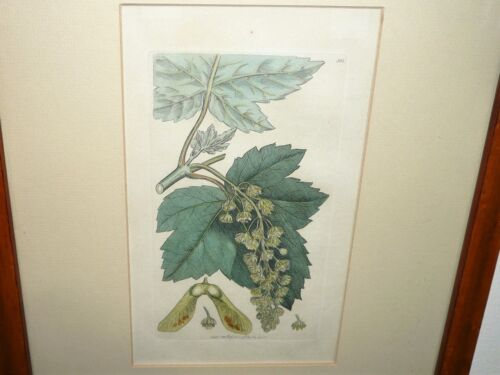 ANTIQUE ORIGINAL DATED FEB 1796 ENGLISH BOTANY HAND COLOURED BY JAMES SOWERBY