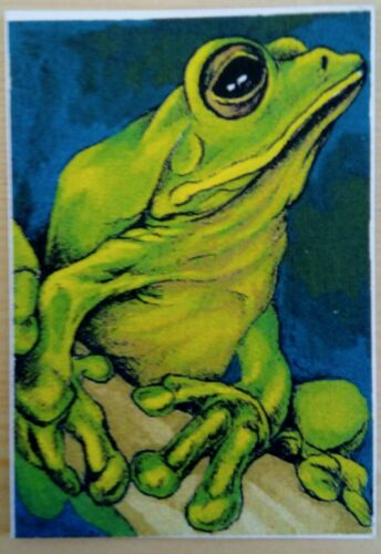 © ART - Ltd.Ed. Green Tree Frog - ACEO collector card by Di