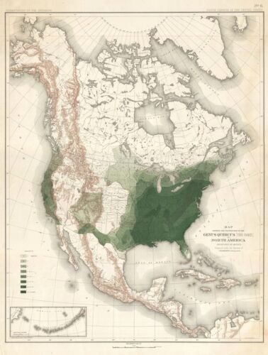 1884 Sargent Arboreal Map of North America Depicting Oak Trees